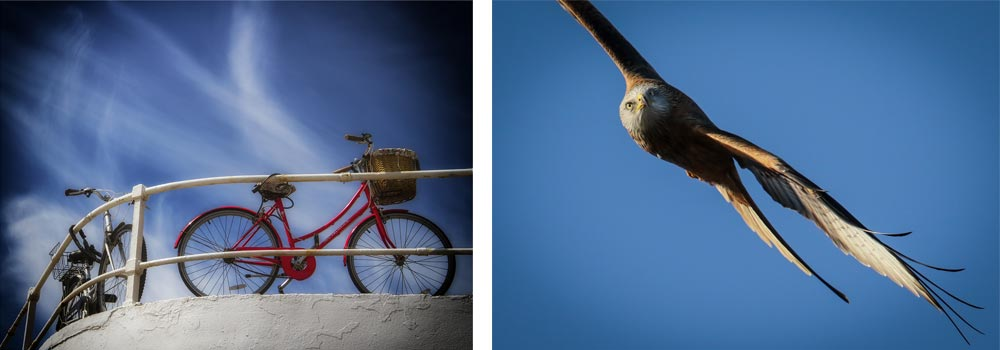 Ticket To Ryde by Caroline Miles&#59; Red Kite by Shaun Hodsdon