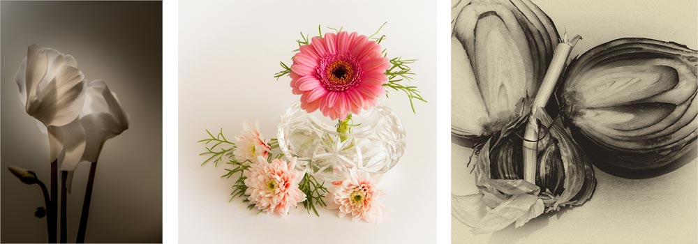 Delicate Light On Cyclamen by Craig Freathy&#59; Shades Of Pink by Audrey Weekes&#59; Alliums by Caroline Miles